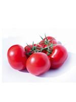 FE_geurts_tomaat.jpg